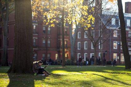 Un estudiante lee bajo un árbol en el campus de la Universidad de Harvard en Cambridge, Estados Unidos.  EFE